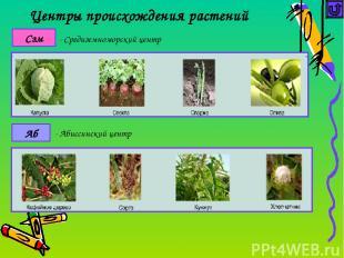 Достижения селекции животных Селекционер Примеры работ по гибридизации Иванов М.