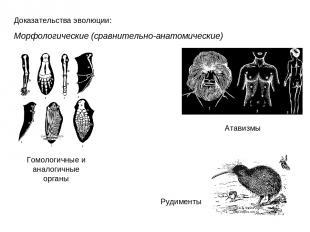 Доказательства эволюции: Морфологические (сравнительно-анатомические) Гомологичн