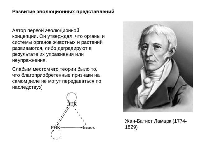 Развитие эволюционных представлений Жан-Батист Ламарк (1774-1829) Автор первой эволюционной концепции. Он утверждал, что органы и системы органов животных и растений развиваются, либо деградируют в результате их упражнения или неупражнения. Слабым м…