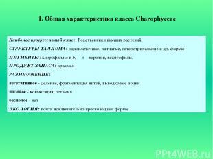 I. Общая характеристика класса Charophyceae Наиболее прогрессивный класс. Родств