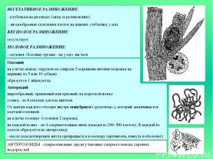 ВЕГЕТАТИВНОЕ РАЗМНОЖЕНИЕ: - клубеньки на ризоидах (запас и размножение) - звездо
