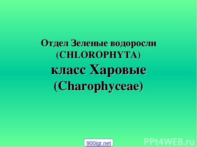 Отдел Зеленые водоросли (CHLOROPHYTA) класс Харовые (Charophyceae) 900igr.net