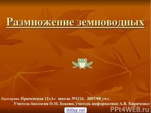 Размножение земноводных Екатерина Прилепская 11«А» школа №1216 2007/08 уч.г. Учи