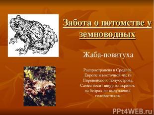 Жаба-повитуха Распространена в Средней Европе и восточной части Пиренейского пол