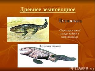 """Древнее земноводное Ихтиостега Внутреннее строение «Переходное звено"""" между рыба"""