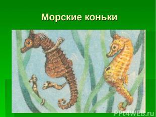 Морские коньки