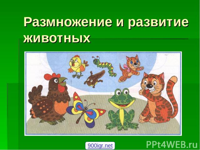 Размножение и развитие животных 900igr.net