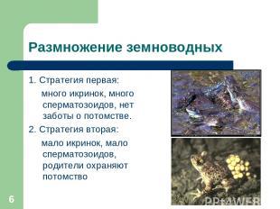 * Размножение земноводных 1. Стратегия первая: много икринок, много сперматозоид
