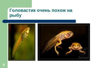* Головастик очень похож на рыбу
