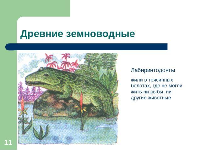 * Древние земноводные Лабиринтодонты жили в трясинных болотах, где не могли жить ни рыбы, ни другие животные
