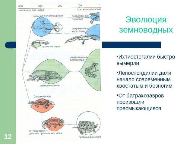 * Эволюция земноводных Ихтиостегалии быстро вымерли Лепоспондилии дали начало современным хвостатым и безногим От батрахозавров произошли пресмыкающиеся