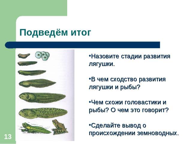 * Подведём итог Назовите стадии развития лягушки. В чем сходство развития лягушки и рыбы? Чем схожи головастики и рыбы? О чем это говорит? Сделайте вывод о происхождении земноводных.