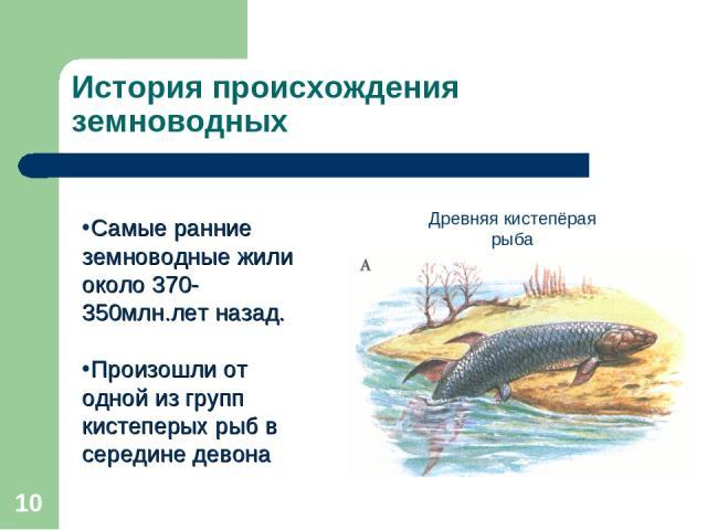 * История происхождения земноводных Самые ранние земноводные жили около 370-350млн.лет назад. Произошли от одной из групп кистеперых рыб в середине девона Древняя кистепёрая рыба