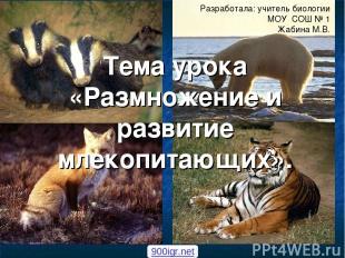 Тема урока «Размножение и развитие млекопитающих». Разработала: учитель биологии
