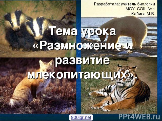 Тема урока «Размножение и развитие млекопитающих». Разработала: учитель биологии МОУ СОШ № 1 Жабина М.В. 900igr.net