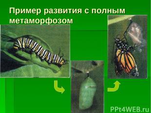 Пример развития с полным метаморфозом