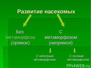 Развитие насекомых С полным метаморфозом Без метаморфоза (прямое) С метаморфозом