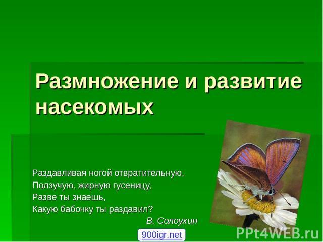Размножение и развитие насекомых Раздавливая ногой отвратительную, Ползучую, жирную гусеницу, Разве ты знаешь, Какую бабочку ты раздавил? В. Солоухин 900igr.net