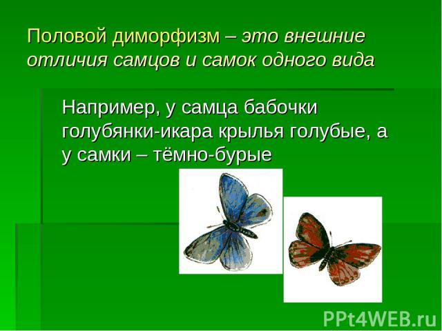 Половой диморфизм – это внешние отличия самцов и самок одного вида Например, у самца бабочки голубянки-икара крылья голубые, а у самки – тёмно-бурые