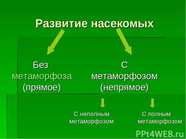 Развитие насекомых С полным метаморфозом Без метаморфоза (прямое) С метаморфозом (непрямое) С неполным метаморфозом