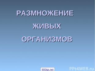 РАЗМНОЖЕНИЕ ЖИВЫХ ОРГАНИЗМОВ 900igr.net