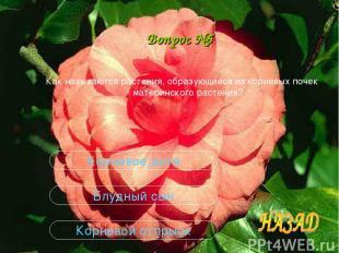 Вопрос №5 Как называются растения, образующиеся из корневых почек материнского р