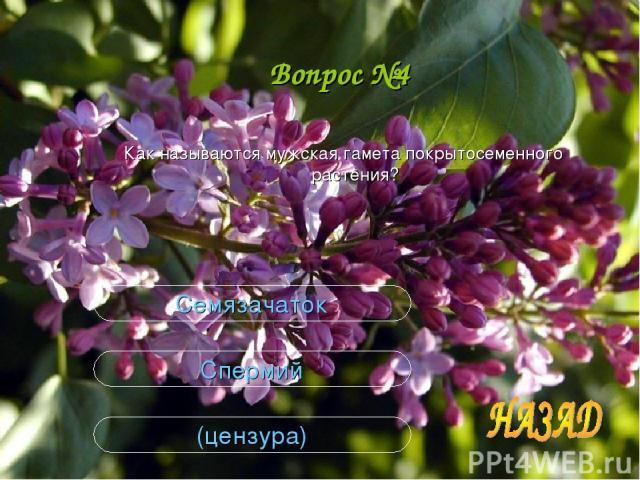Вопрос №4 Как называются мужская гамета покрытосеменного растения? (цензура) Спермий Семязачаток