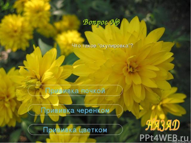 """Вопрос №3 Что такое """"окулировка""""? Прививка цветком Прививка черенком Прививка почкой"""