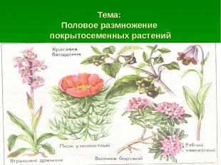 Тема: Половое размножение покрытосеменных растений