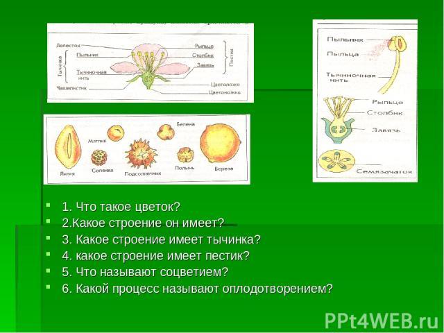 1. Что такое цветок? 2.Какое строение он имеет? 3. Какое строение имеет тычинка? 4. какое строение имеет пестик? 5. Что называют соцветием? 6. Какой процесс называют оплодотворением?
