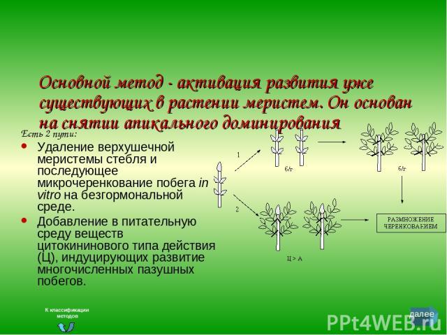 Основной метод - активация развития уже существующих в растении меристем. Он основан на снятии апикального доминирования Есть 2 пути: Удаление верхушечной меристемы стебля и последующее микрочеренкование побега in vitro на безгормональной среде. Доб…