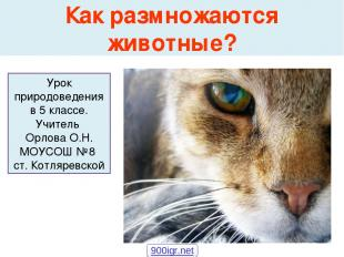 Как размножаются животные? Урок природоведения в 5 классе. Учитель Орлова О.Н. М