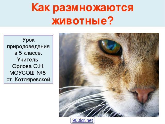 Как размножаются животные? Урок природоведения в 5 классе. Учитель Орлова О.Н. МОУСОШ №8 ст. Котляревской 900igr.net