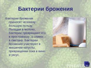 Бактерии брожения Бактерии брожения приносят человеку большую пользу. Попадая в