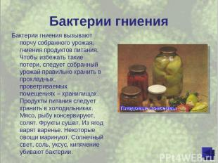 Бактерии гниения Бактерии гниения вызывают порчу собранного урожая, гниения прод