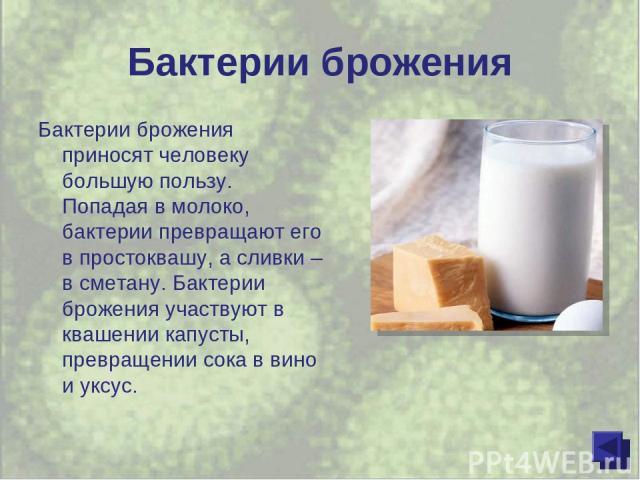 Бактерии брожения Бактерии брожения приносят человеку большую пользу. Попадая в молоко, бактерии превращают его в простоквашу, а сливки – в сметану. Бактерии брожения участвуют в квашении капусты, превращении сока в вино и уксус.