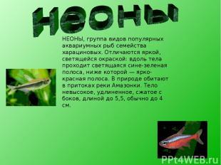НЕОНЫ, группа видов популярных аквариумных рыб семейства харациновых. Отличаются