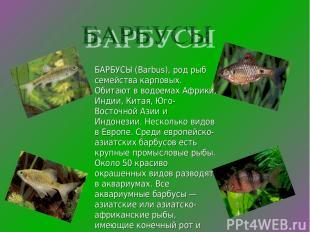 БАРБУСЫ (Barbus), род рыб семейства карповых. Обитают в водоемах Африки, Индии,