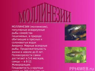 МОЛЛИНЕЗИИ (моллинезии), популярные аквариумные рыбы семейства пецилиевых, в при