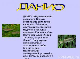 ДАНИО, общее название рыб родов Danio и Brachydanio семейства карповых. 7-8 видо