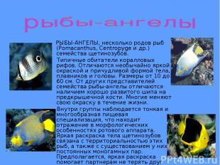 РЫБЫ-АНГЕЛЫ, несколько родов рыб (Pomacanthus, Centropyge и др.) семейства щетин