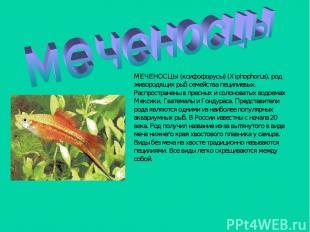МЕЧЕНОСЦЫ (ксифофорусы) (Xiphophorus), род живородящих рыб семейства пецилиевых.