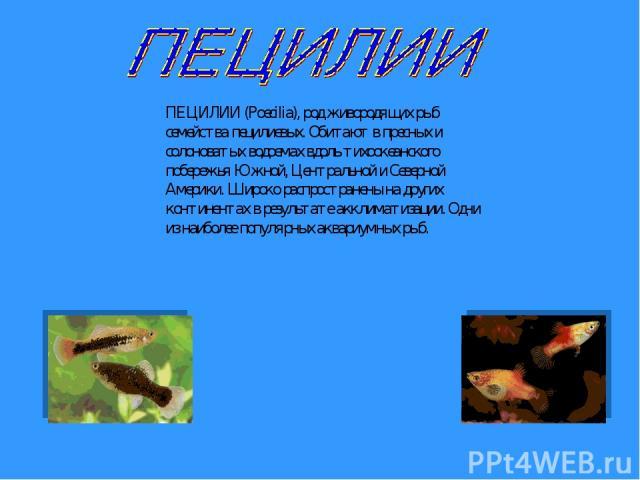 ПЕЦИЛИИ (Poecilia), род живородящих рыб семейства пецилиевых. Обитают в пресных и солоноватых водоемах вдоль тихоокеанского побережья Южной, Центральной и Северной Америки. Широко распространены на других континентах в результате акклиматизации. Одн…