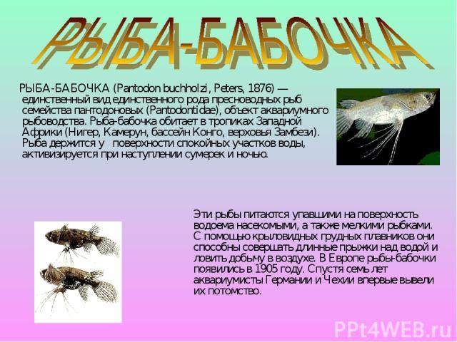 РЫБА-БАБОЧКА (Pantodon buchholzi, Peters, 1876) — единственный вид единственного рода пресноводных рыб семейства пантодоновых (Pantodontidae), объект аквариумного рыбоводства. Рыба-бабочка обитает в тропиках Западной Африки (Нигер, Камерун, бассейн …