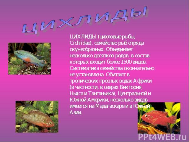 ЦИХЛИДЫ (цихловые рыбы, Cichlidae), семейство рыб отряда окунеобразных. Объединяет несколько десятков родов, в состав которых входит более 1500 видов. Систематика семейства окончательно не установлена. Обитают в тропических пресных водах Африки (в ч…