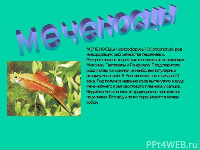 МЕЧЕНОСЦЫ (ксифофорусы) (Xiphophorus), род живородящих рыб семейства пецилиевых. Распространены в пресных и солоноватых водоемах Мексики, Гватемалы и Гондураса. Представители рода являются одними из наиболее популярных аквариумных рыб. В России изве…