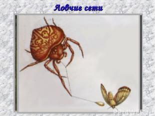 Ловчие сети пауков