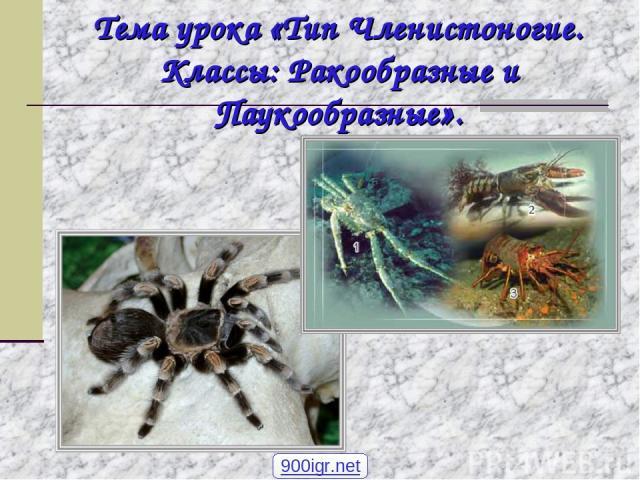 Тема урока «Тип Членистоногие. Классы: Ракообразные и Паукообразные». 900igr.net