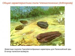 Общая характеристика типа Членистоногие (Arthropoda) Животные подтипа Трилобитоо