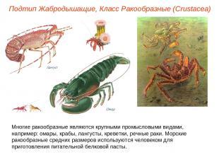 Подтип Жабродышащие, Класс Ракообразные (Crustacea) Многие ракообразные являются